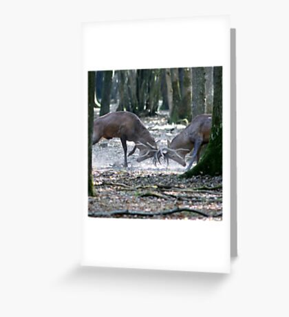 Red deers fighting Greeting Card