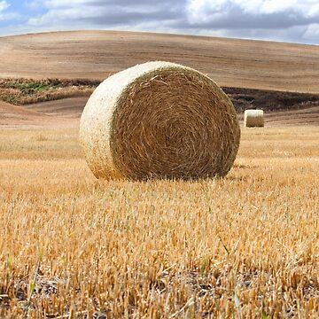 Hay Bale Photography Print by griffingphoto