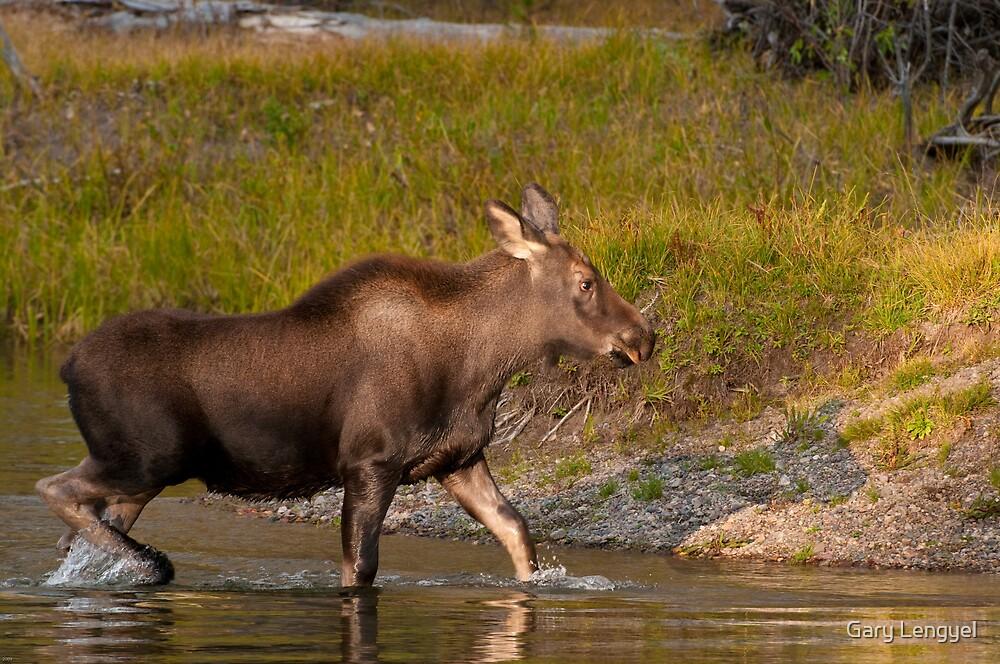 Moose Crossing by Gary Lengyel