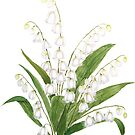 white lily of valley watercolor  by ColorandColor