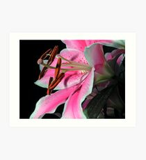 Lily on Black Art Print