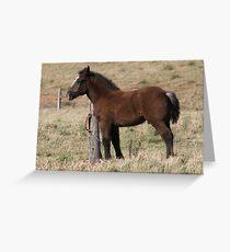 Little Rock Maximus Greeting Card
