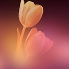 Dreamy Tulips 2 by hurmerinta