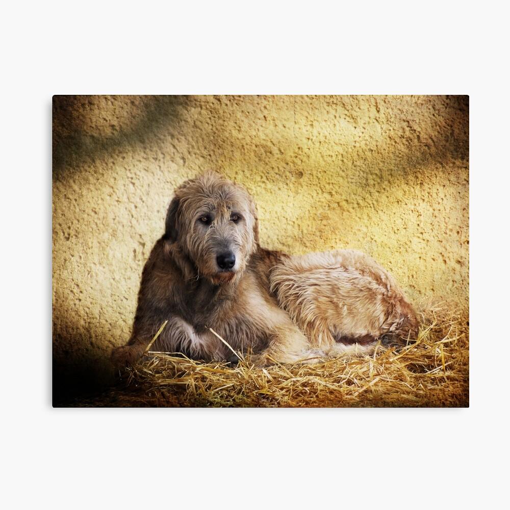 Irish Wolfhound Canvas Print