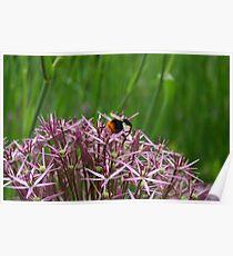 English Bumble Bee 1 Poster