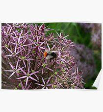 English Bumble Bee 2 Poster