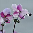 Anemones by Nancy Barrett