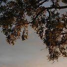 The Old Oak Tree by Margaret  Shark
