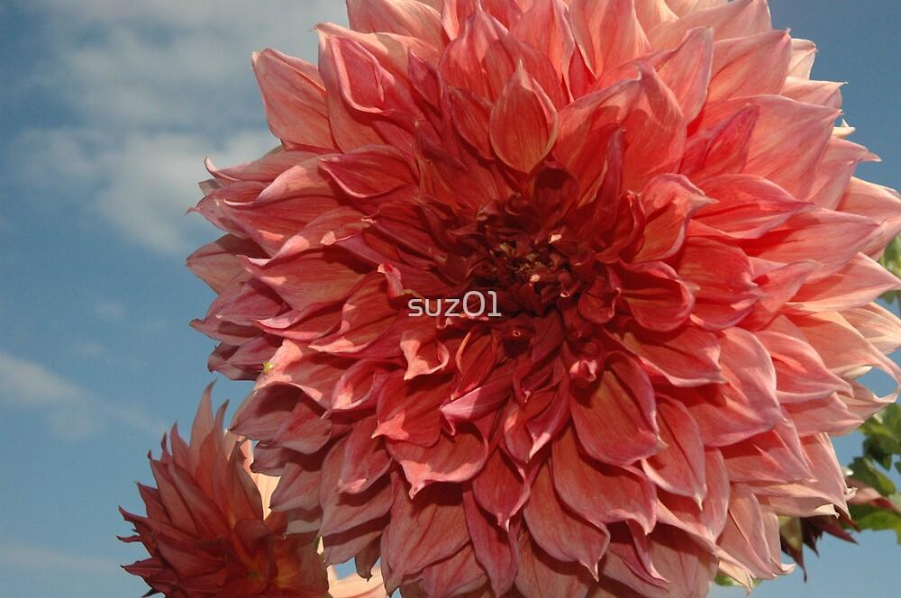 Pink Dahlia by suz01