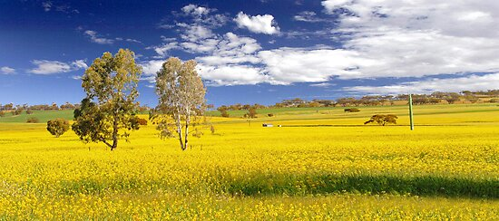 Canola Field In Spring  by EOS20