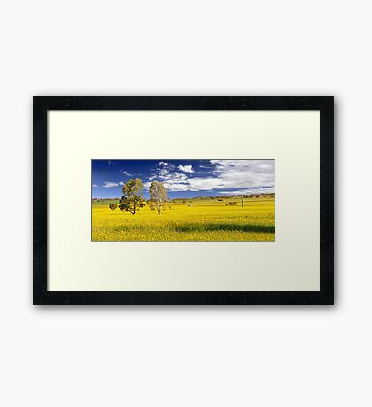 Canola Field In Spring  Framed Print