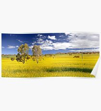 Canola Field In Spring  Poster