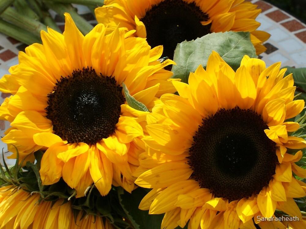 2 Huge sunflowers  by Sandraeheath