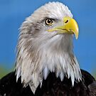 Bald Eagle by Jerry Walter