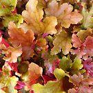 Herbst Farbe von trish725
