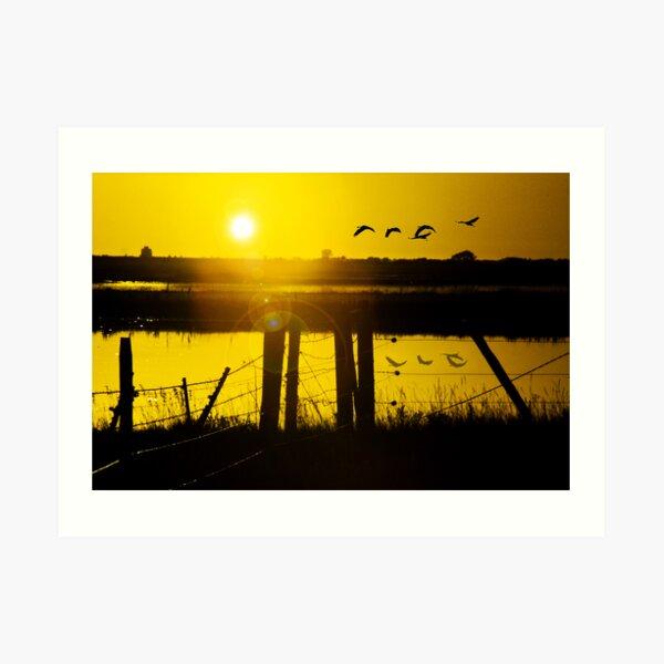 Sand Hill Cranes at Sunset Art Print