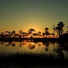 morning light by kathy s gillentine