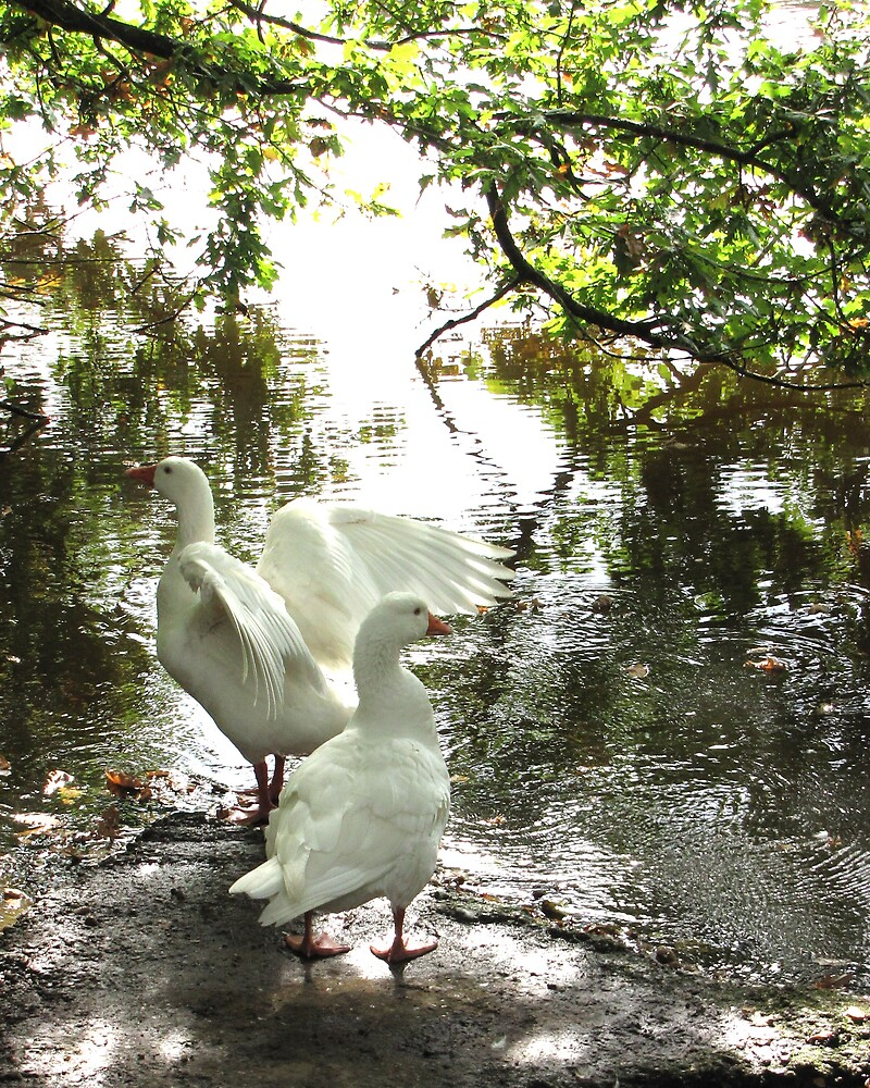 White Geese by John Thurgood