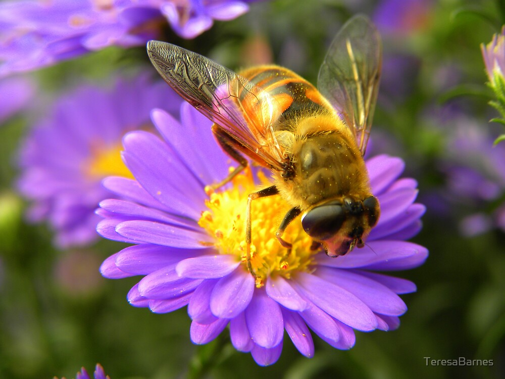A bee's life... by TeresaBarnes