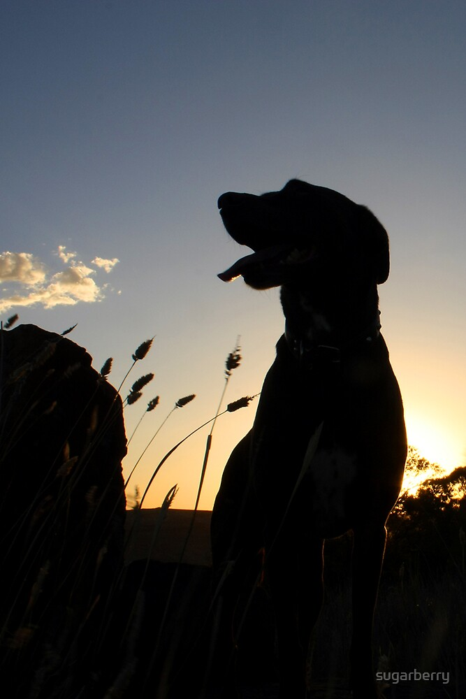 Isobel at sunrise by sugarberry