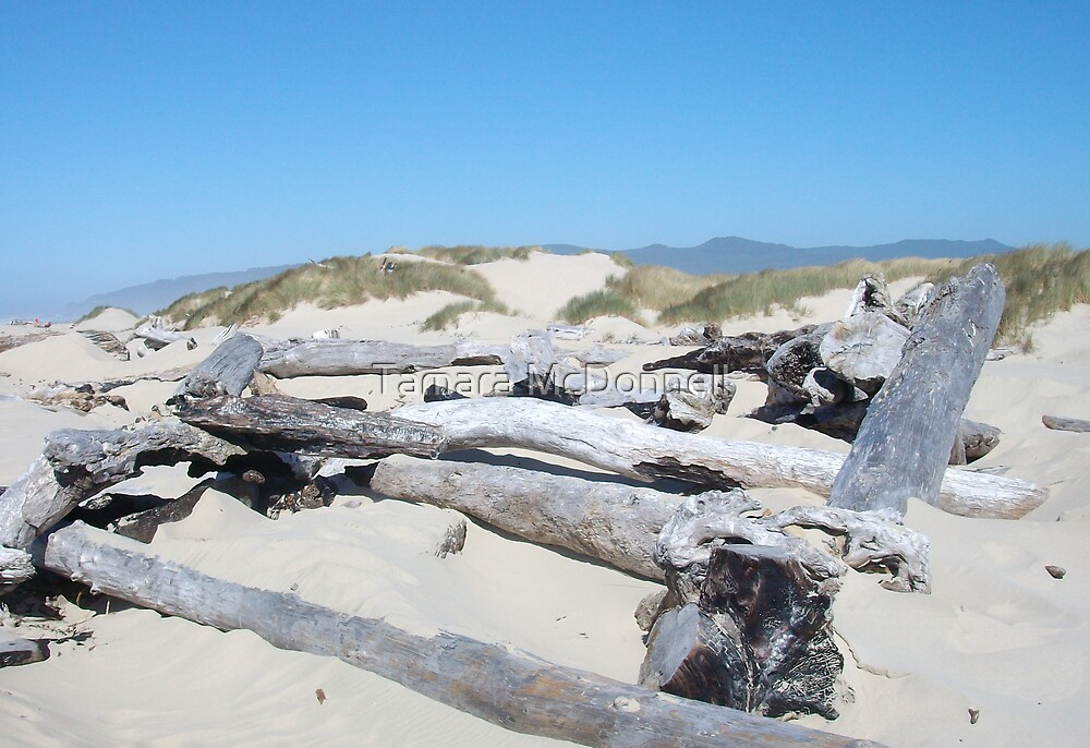 Driftwood in the Sand by Tamara Lindsey