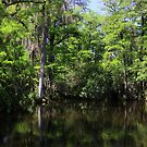 Big Cypress Swamp by kathy s gillentine