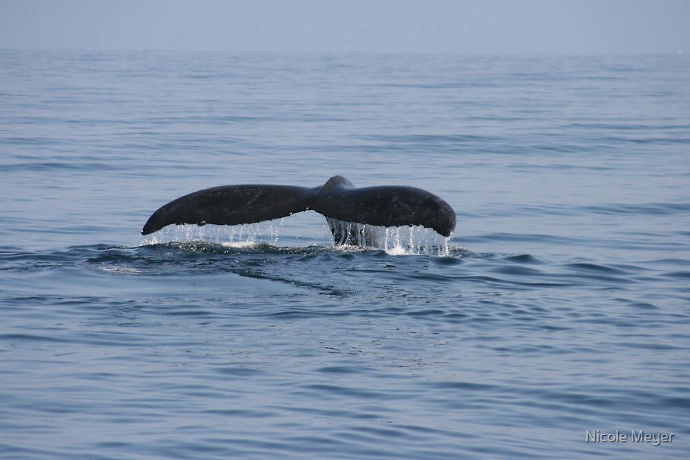 Humpback Whale by Nicole Meyer