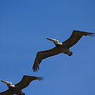 Pelican Formation by blew12bandit