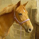 Gorgeous Pony by Paul Morley