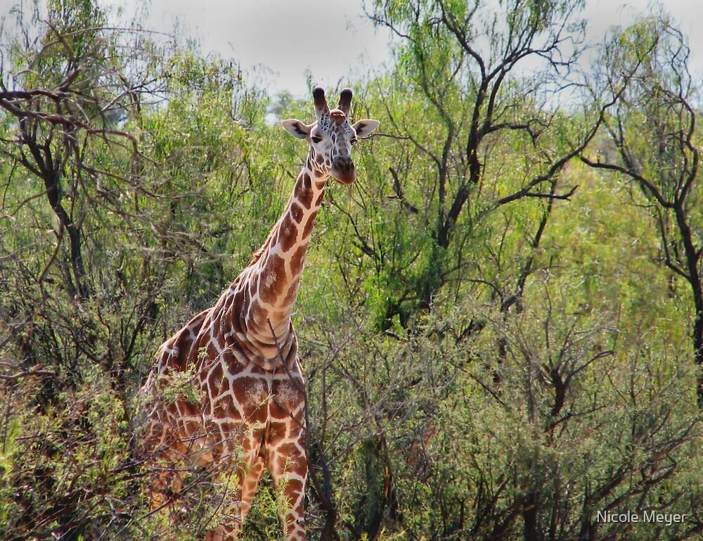 Giraffe by Nicole Meyer