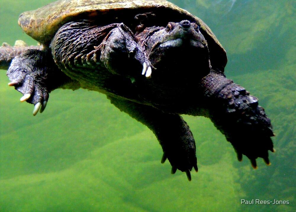 Turtle! by Paul Rees-Jones