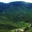 Panorama of exotic tea plantation by hazelong