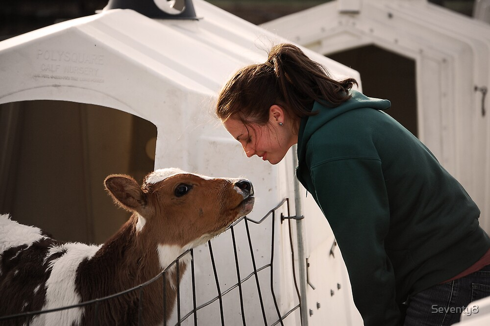 Emily and the Calf by Seventy8