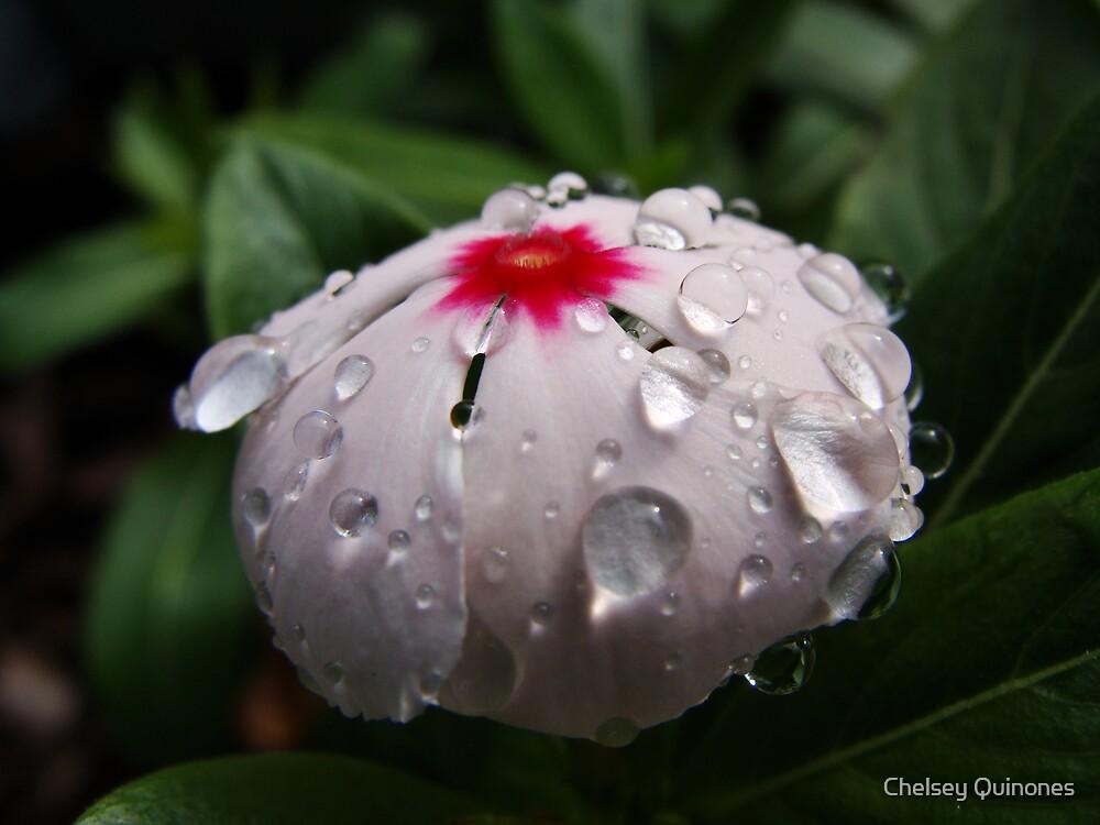 acqua sui petali by Chelsey Quinones