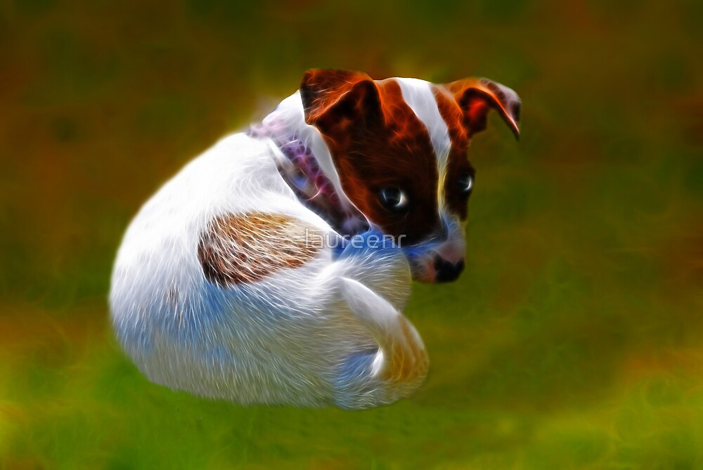 Jack Russell, but my name is Narlia   by laureenr