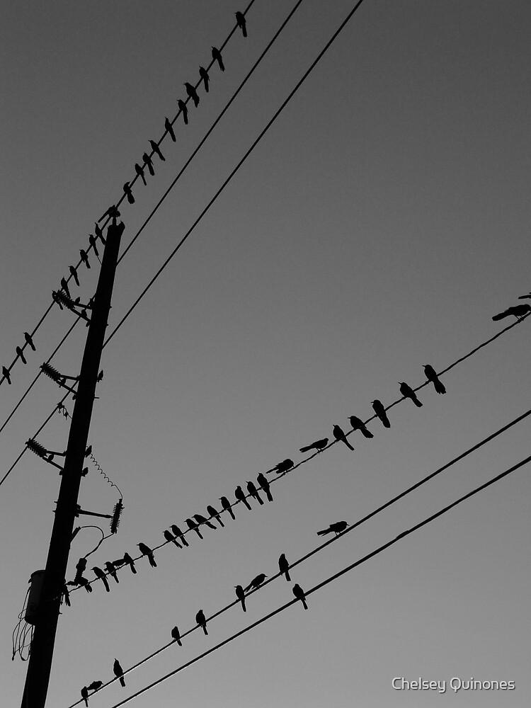 birds by Chelsey Quinones