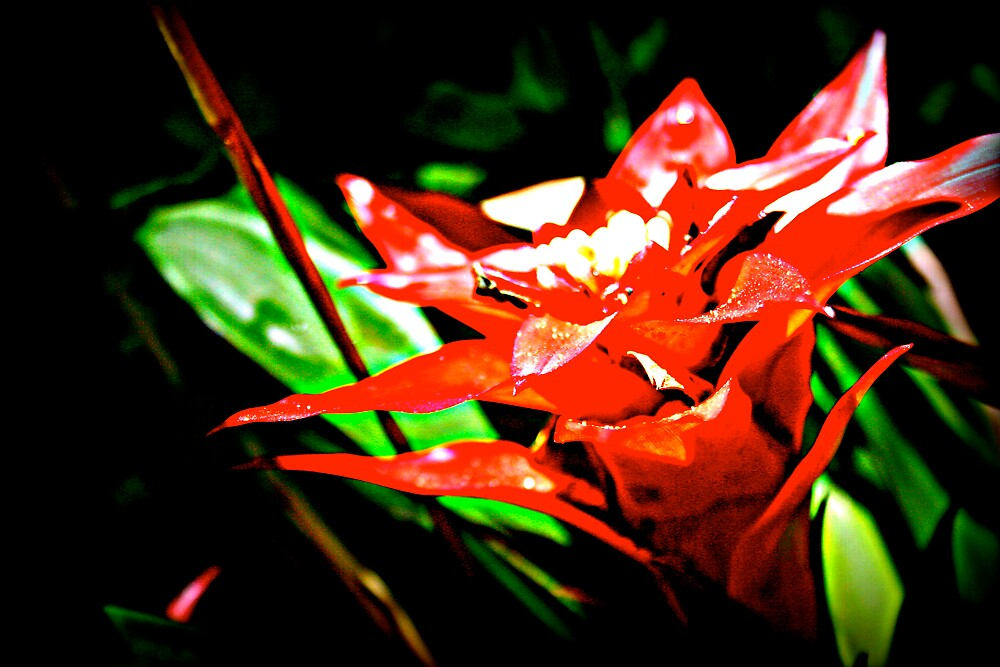 Red Edit by Gabrielle Harrington