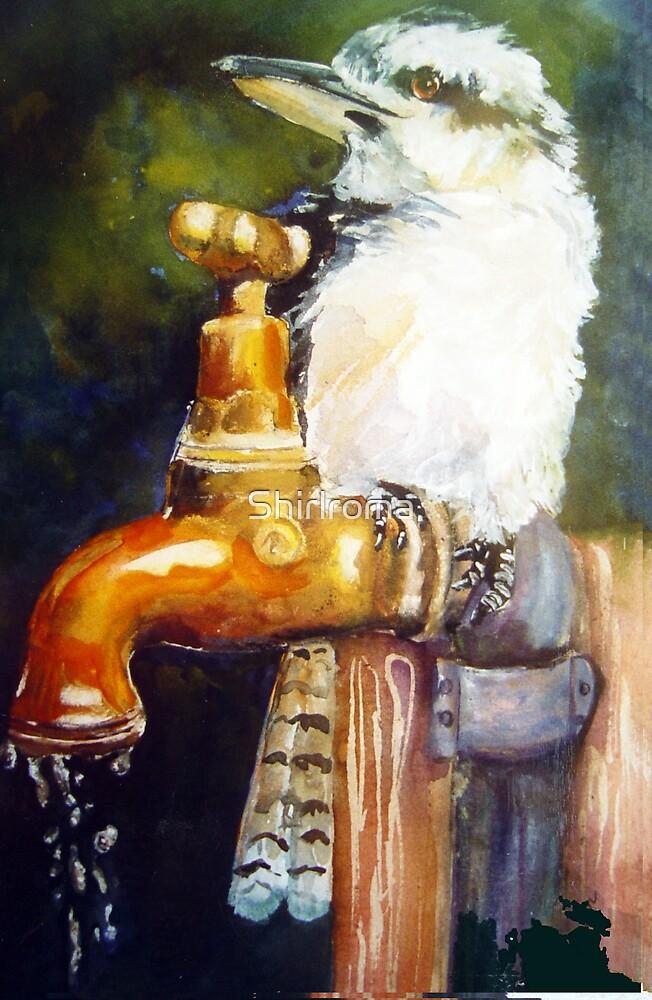 Thirsty Kookaburra by Shirlroma