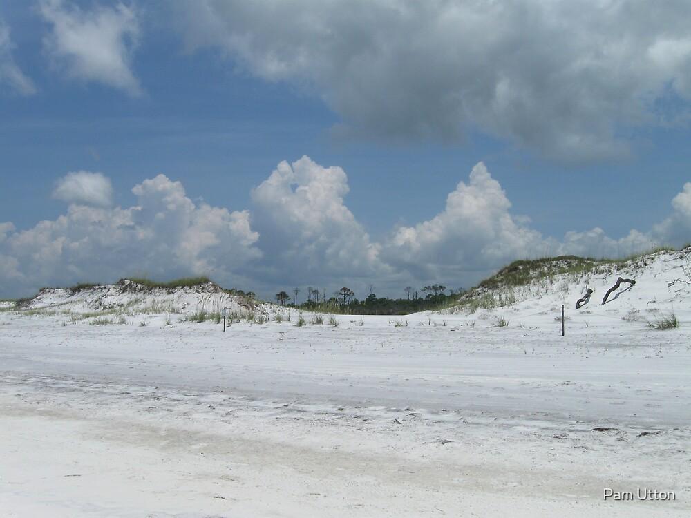 Beach Dunes by Pam Utton