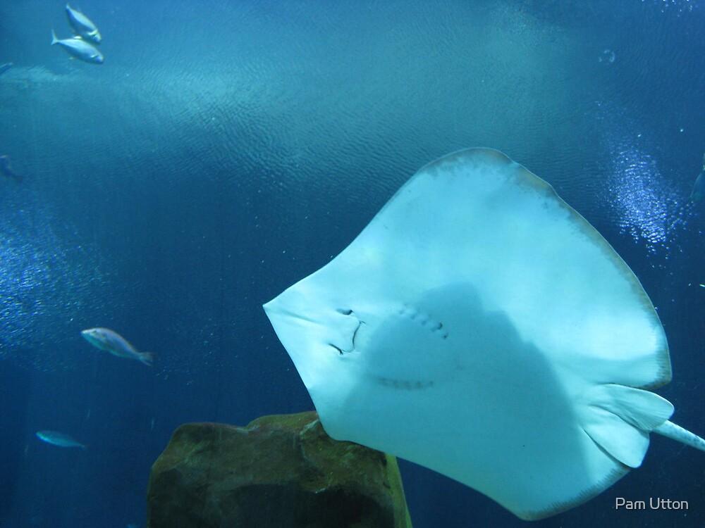 Atlanta Aquarium Ray by Pam Utton