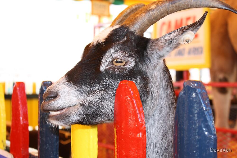 Goat by DaveVan