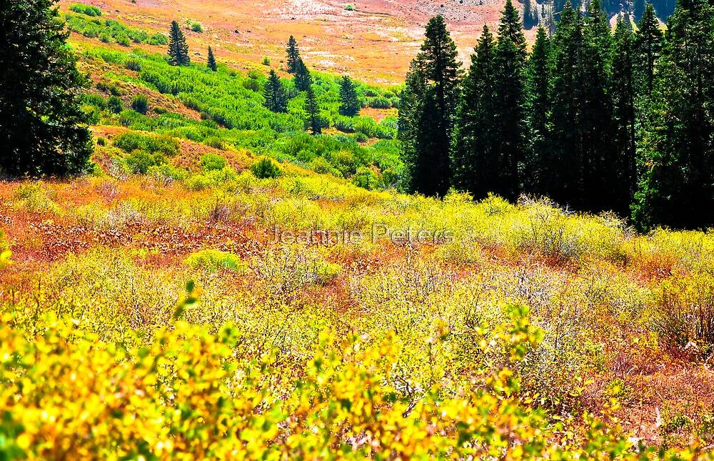 Siskiyou Mountains  by Jeannie Peters