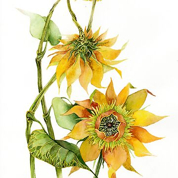 sunflower by armornavy
