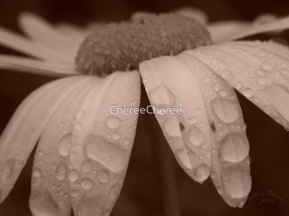 Life of A Daisy by ChereeCheree