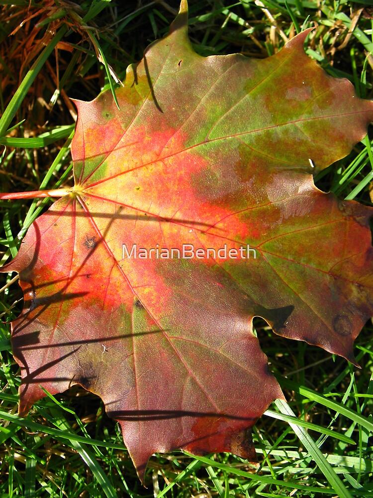 The Canadian Maple Leaf by MarianBendeth