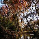 autumn along the creek by Jamaboop