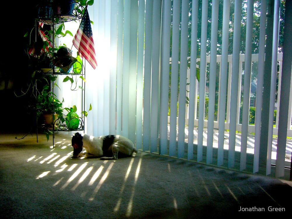 Terrier Sun Rays by Jonathan  Green