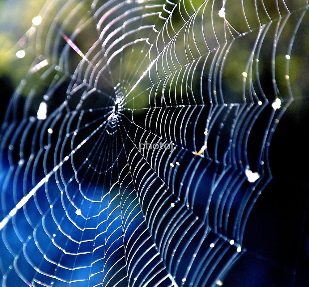 """photoj """"Come Into My Spider Webb"""" by photoj"""