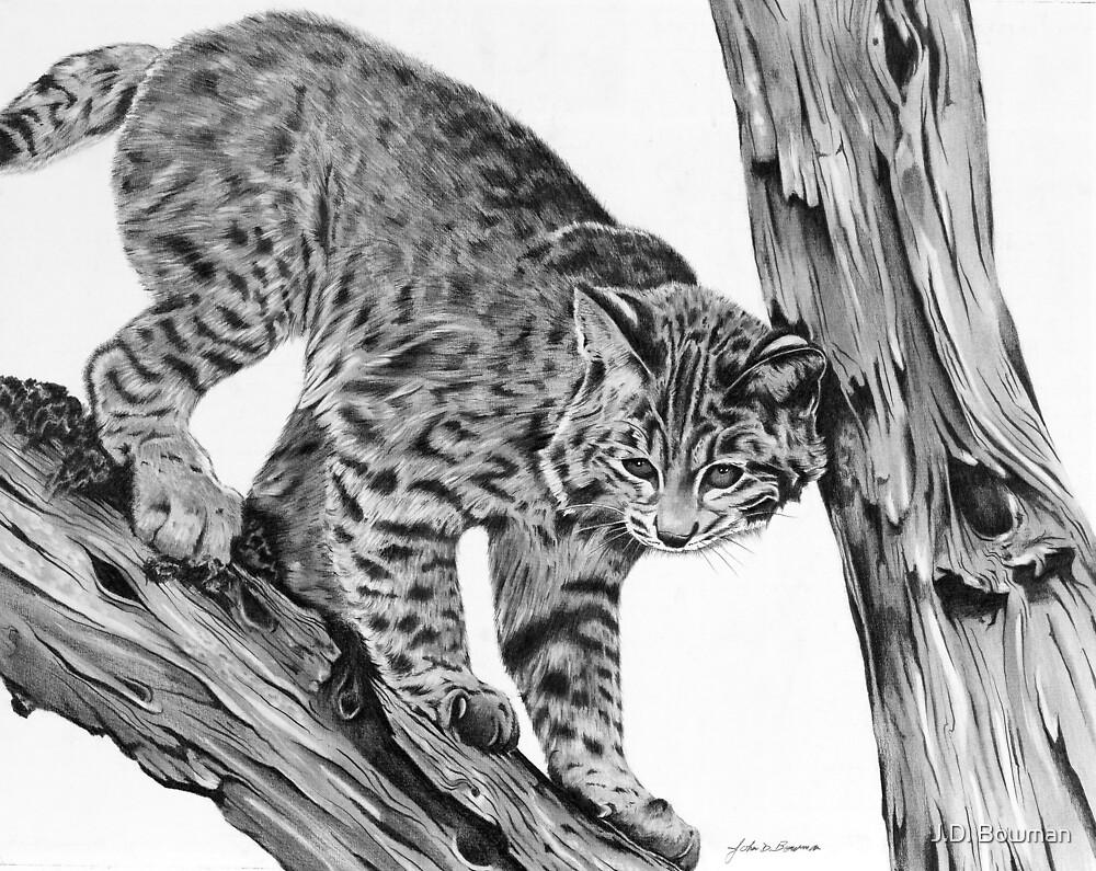 Bobcat by J.D. Bowman