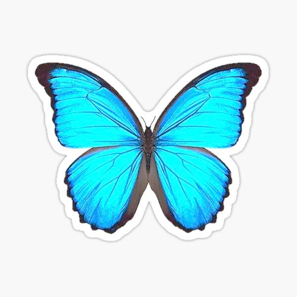 Blue Morpho Butterfly Art  Sticker